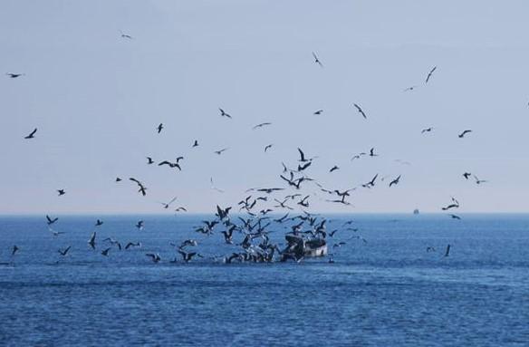 La production de la pêche en recul dans le Léman