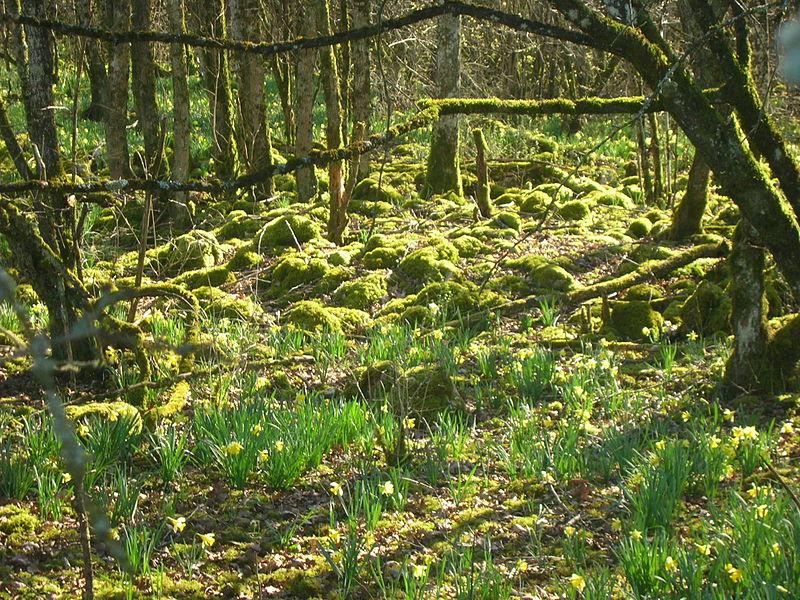 Le Parc national des Forêts, onzième parc français, est né en Bourgogne et en Champagne