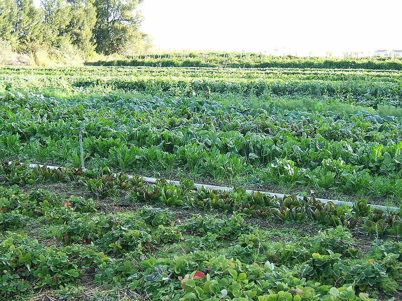 Changement d'échelle de l'agriculture bio : l'Inra lance un métaprogramme