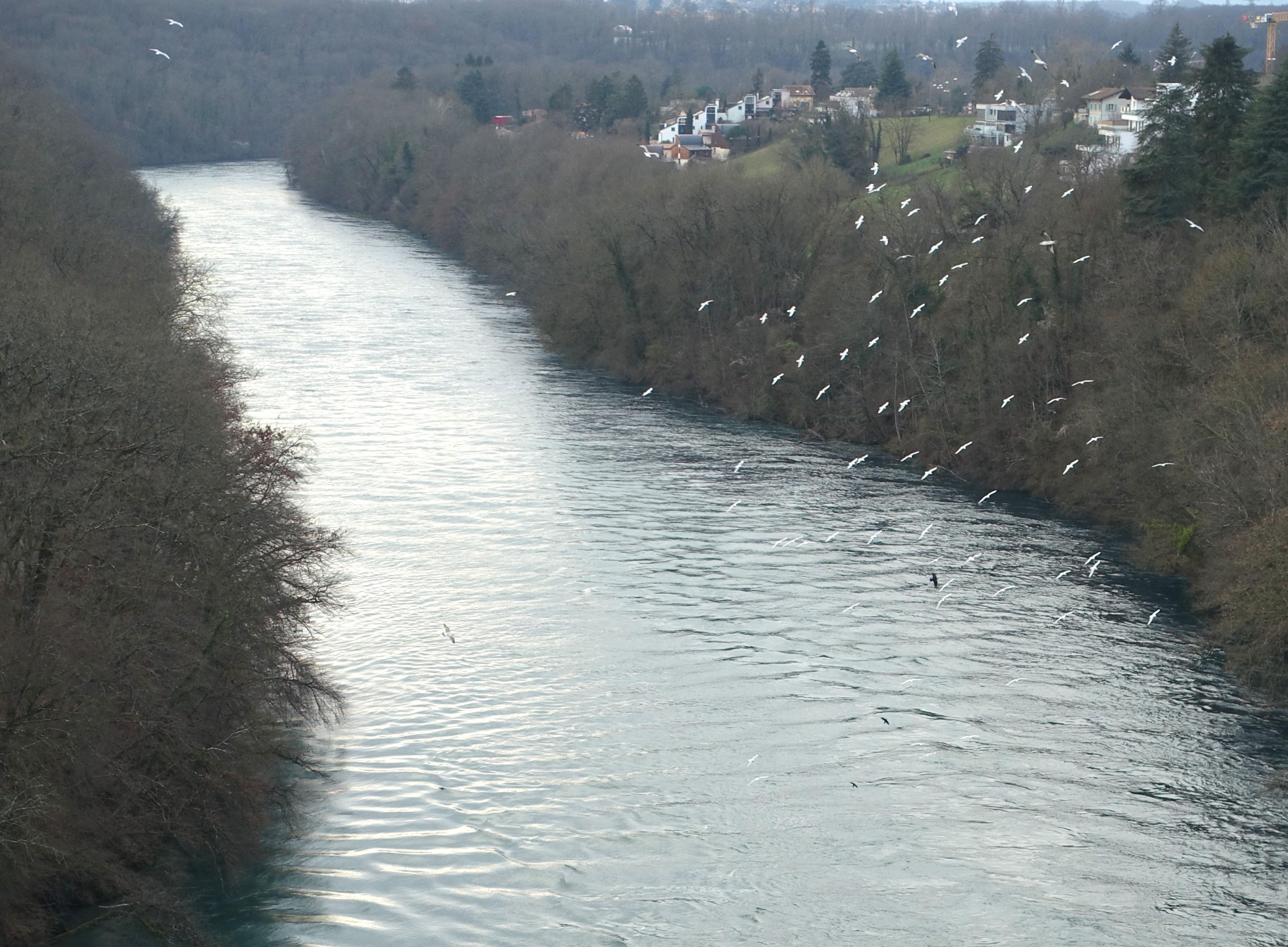 Haut Rhône : la chasse des sédiments repoussée en 2021
