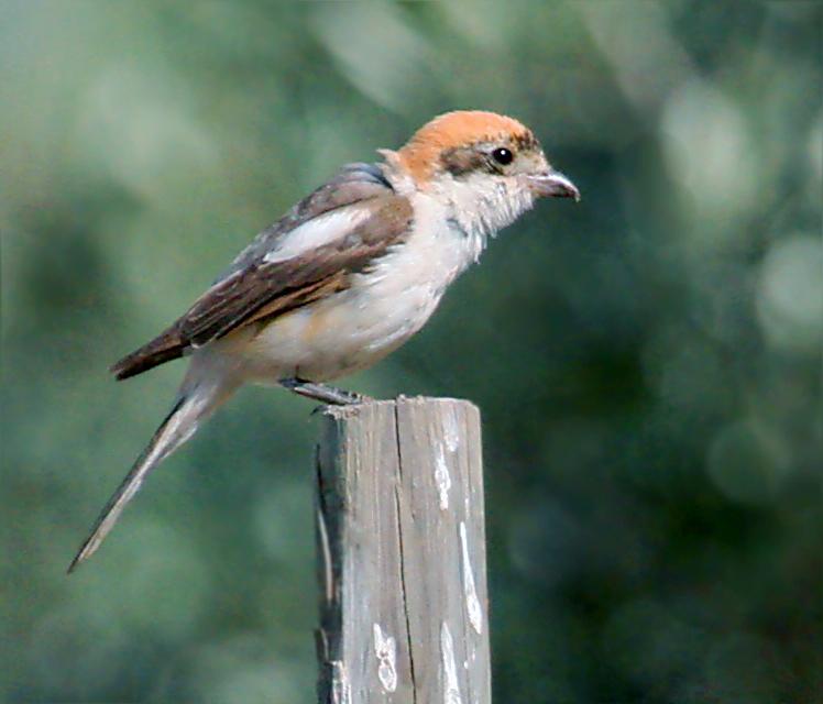 Ardèche : l'Union des Viticulteurs partenaire de la Ligue de Protection des Oiseaux
