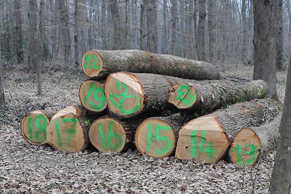 L'enjeu du label « Chêne de l'Allier » est de faciliter la structuration d'une filière bois localecréatrice de richesse pour tous ses acteurs. ©B.Mortgat.