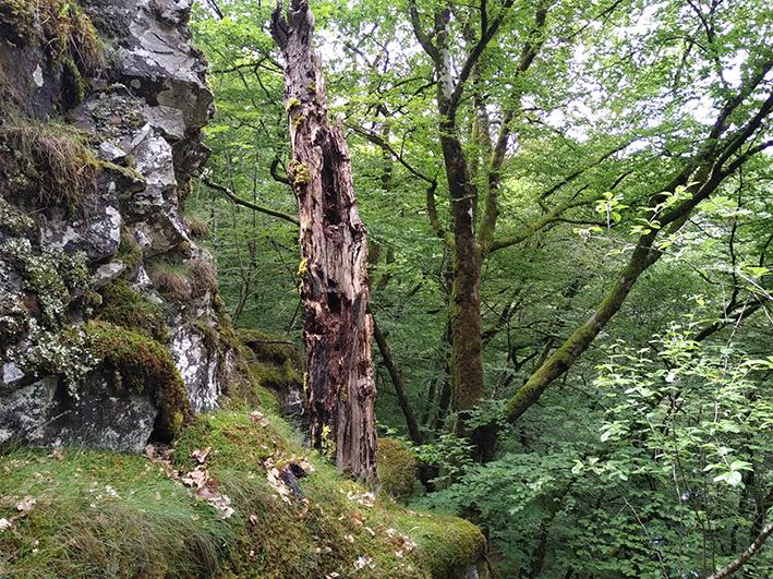 Sylvae, réseau de vieilles forêts en Auvergne, accueille un nouveau mécène