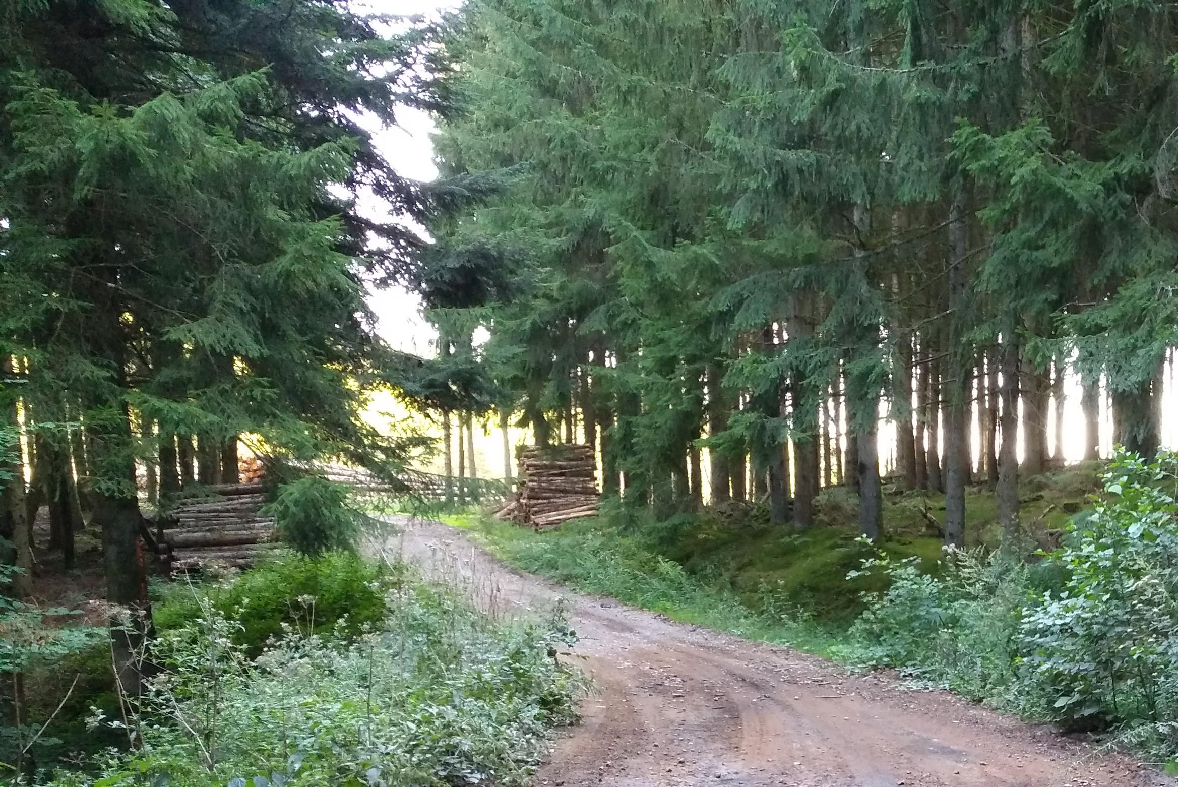 L'ONF ne sera pas l'intermédiaire comptable des communes forestières dans la vente de bois