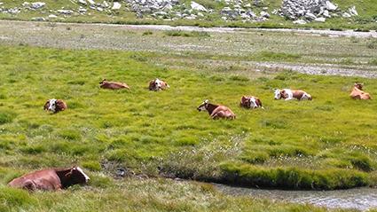 Auvergne-Rhône-Alpes : un plan pour protéger le pastoralisme