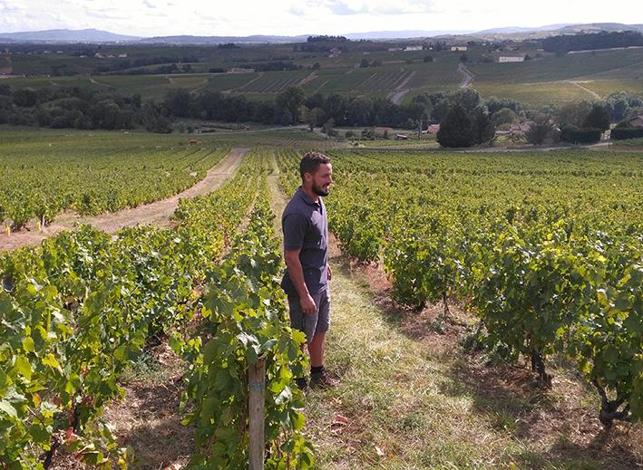 Des vignes cultivées en agroécologie en Beaujolais