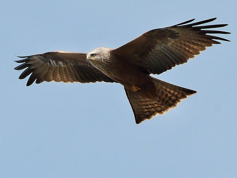 Populations d'oiseaux en Auvergne-Rhône-Alpes : évolution contrastée en fonction des habitats