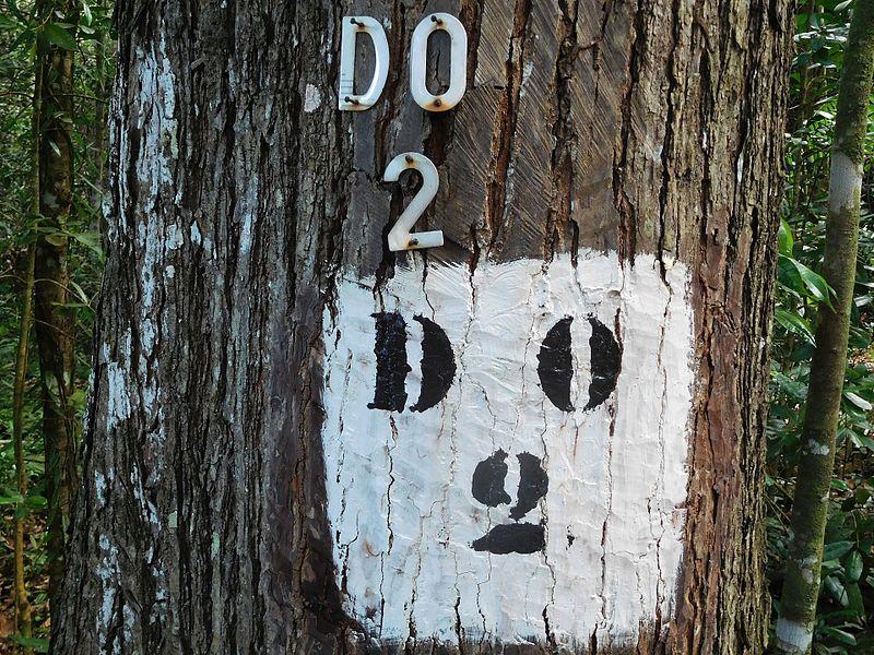 Bois et forêt : l'Ardèche soutient la filière