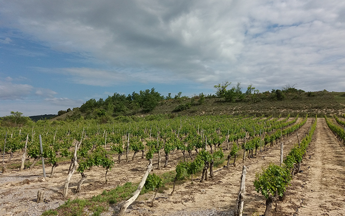 Le développement de la biodiversité, priorité revendiquée par les vignerons ardéchois