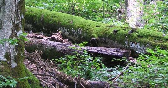 L'Etat de Vaud renforce son réseau de réserves forestières par des îlots de sénescence