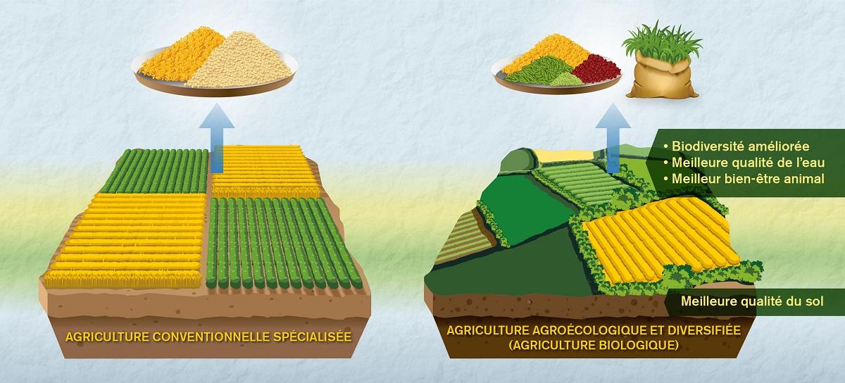 Vers une meilleure comparaison entre agriculture biologique et conventionnelle