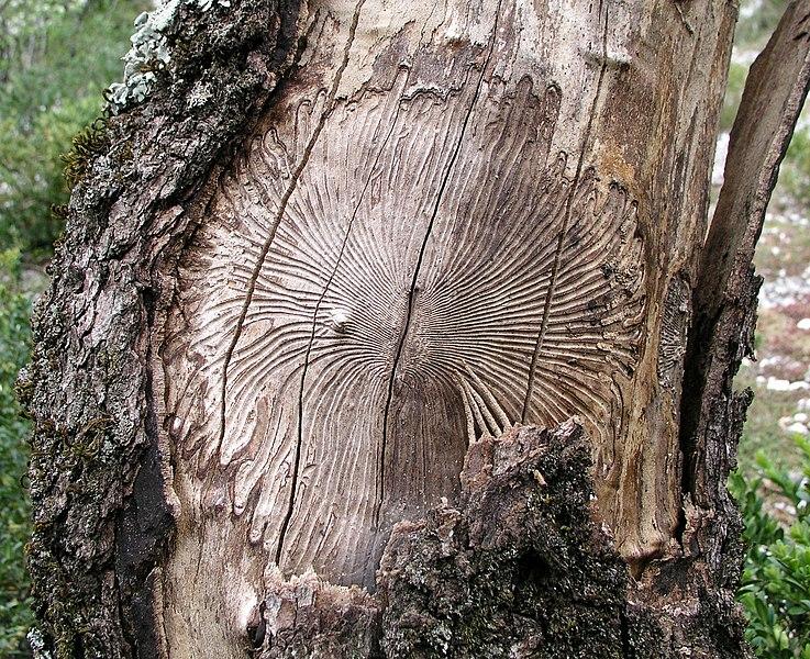 Le dérèglement climatique met les coopératives forestières à rude épreuve